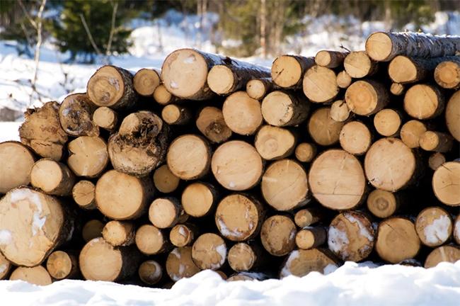 Scandinavian Wood for Luonto Sleeper Sofas